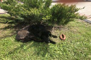 На Волині так заморили голодом собаку, що навіть не мав сили їсти ковбасу