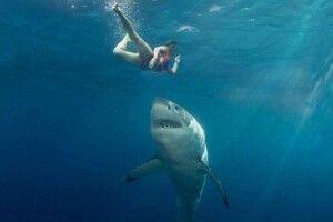 60-річний Марк відлупцював акулу, яка напала на його молоду дружину
