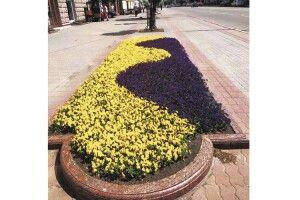 У Луцьку «виткали» квіткові килими