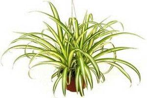 Які кімнатні рослини незамінні у вашій оселі. Поради господарям