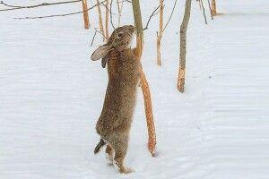 Захистіть саджанці від зайців
