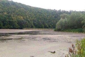 Пенсіонерка з Прикарпаття пролежала два тижні у болоті і вижила