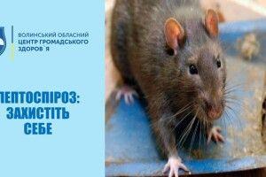 У серпні двоє волинян захворіли на лептоспіроз