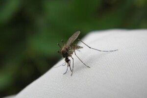 Комахи коронавірус непереносять