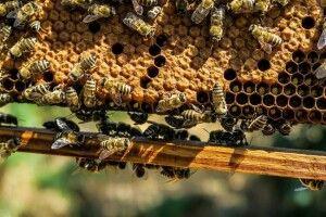 На Волині мед вкрали разом з вуликом