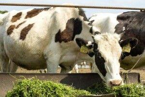 На Рівненщині фермерські господарства ростуть, неначе гриби після дощу