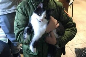 У Луцьку батько із сином зробили щасливими котика Фелікса та собачку Джессі (фото)