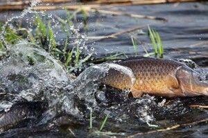 Ловись, рибко: 21 травня завершується нерестова заборона на річках Волині