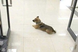 Пес три місяці чекав господаря напорозі лікарні