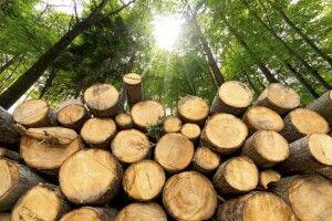 Торік на Рівненщині відкрито 11 кримінальних проваджень за крадіжки лісу