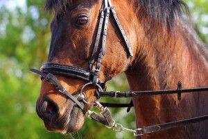 Волинські поліцейські просять допомогти розшукати двох коней