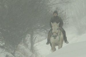 Верхи на коні – у країну знань!