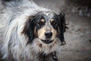 У Луцьку кудлата дама в повному розквіті сил шукає своє собаче щастя (Фото)