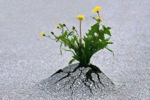 Написати б усюди курсивами: «Живіть, бо життя має сенс!»