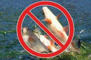 З 1 квітня розпочинається нерест риби