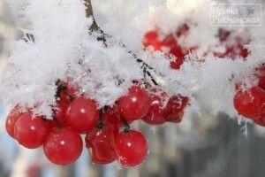 Погода на четвер, 30 січня: Антон Перезимник принесе нам трохи мокрого снігу