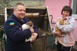 Рятувальникам довелося витягати двох котів, які під час бійки шубовснули у криницю (фото)