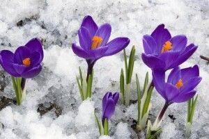 Погода на середу, 3 лютого: вночі трішки приморозить, а вдень – знову відлига