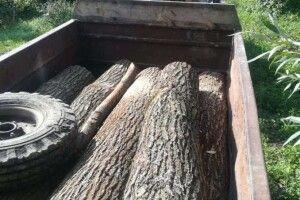 На Волині лісівники за допомогою фотопастки  зловили крадіїв дуба