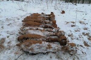 На Волині сапери знешкодили 9 мін, 1 снаряд та 1 авіабомбу