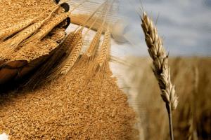 Зернотрейдери пропонують фермерам грабіжницькі ціни