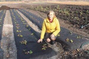 Чому волинські господарі позбували всю живність ізайнялися садівництвом