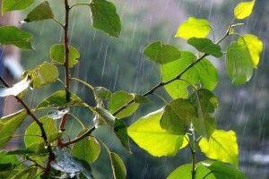 У середу на Волині буде прохолодно. Та ще й дощ...