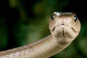 Під час роботи в полі волинянку вкусила змія