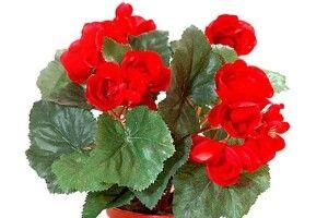 Аспірин для …квітів