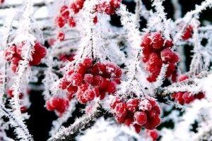 Погода на неділю, 1 грудня: зима нас зустрічає морозцем