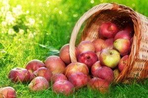 Ось така ода яблуку прозвучала з вуст дітей