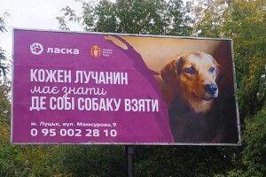 Луцьк заполонила хвостата реклама (фото)