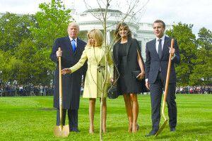 Поганий знак: загинуло дерево Трампа іМакрона