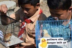 В Індонезії намагаються побороти залежність школярів від смартфонів за допомогою курчат