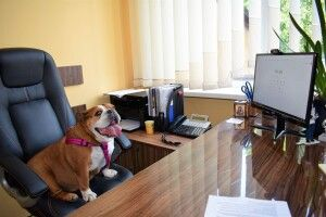 Сьогодні у луцький ЦНАП на роботу прийшли... собаки