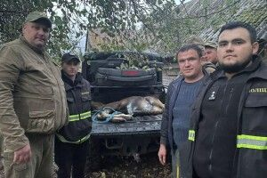 На Волині врятували поранене лосеня (Фото)