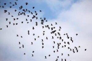 Нацпарк «Цуманська пуща» закликав волинян задирати голови догори й рахувати перелітних птахів (фото)