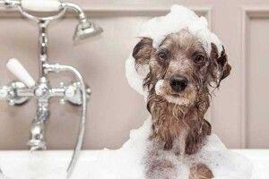 Як правильно купати пса