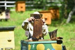 Лісівники Волині освоюють медову справу