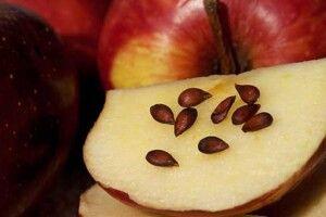 Сила яблучного зернятка
