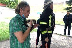 У Ковелі бійці ДСНС штурмували ялину: все задля порятунку кошеняти-верхолаза (Фото)