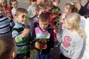Малята взяли участь в науковому експерименті «Від насінини до рослини» (Фото)