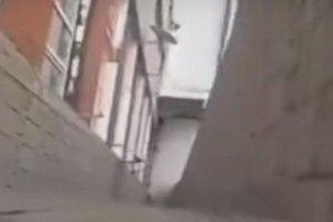 Поліція Львова відкрила провадження через відео, де кота викинули з вікна
