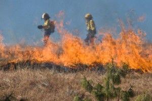 Рятувальники працюють задля збереження врожаю від пожеж