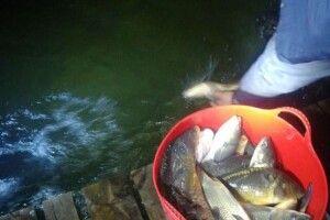 Озеро Сомин прийняло нових мешканців