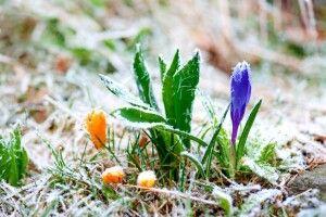 Погода на понеділок, 19 квітня: вночі на поверхні ґрунту синоптики прогнозують заморозки