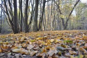 У Рівному встановлять 150 компостерів для переробки опалого листя