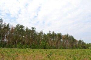 На Волині у державну власність повернуто 60 га земель лісового фонду вартістю 70 млн грн