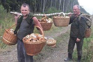 «Назаздрість всім унас гриби ростуть інаасфальті!»