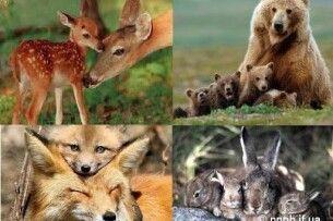 Волинян закликали не заважати тваринам робити нових тварин